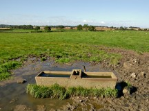 Arrillaga Dining to Introduce Trough-Style Feeding