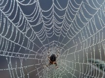 Spider Worried His Web Experience Insufficient for Stanford Admittance