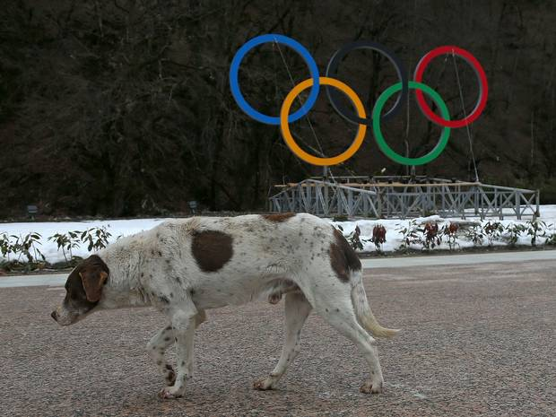 Russian Government Assures International Reporters, Sochi's Stray Dogs Merely Relocated