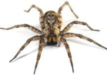 "Careening ""Bike Ride of Terror"" Caused by Spider on Handlebars"
