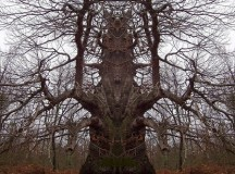 Study Shows That The Tree That Freaked You Out While High Is Actually Objectively Horrifying