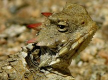 Horny Toad Fucks Like Champ