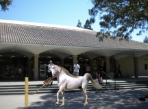 Stanford Review Executes Real Life Unicorn In White Plaza