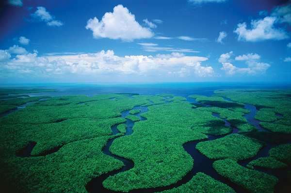 Donald Trump Releases Tax Returns Into The Everglades