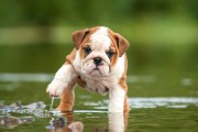 Uh Oh! Big Changes Afoot for Puppy Life Expectancies