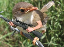 Report: Bird With Gun More Dangerous Than Bird Without