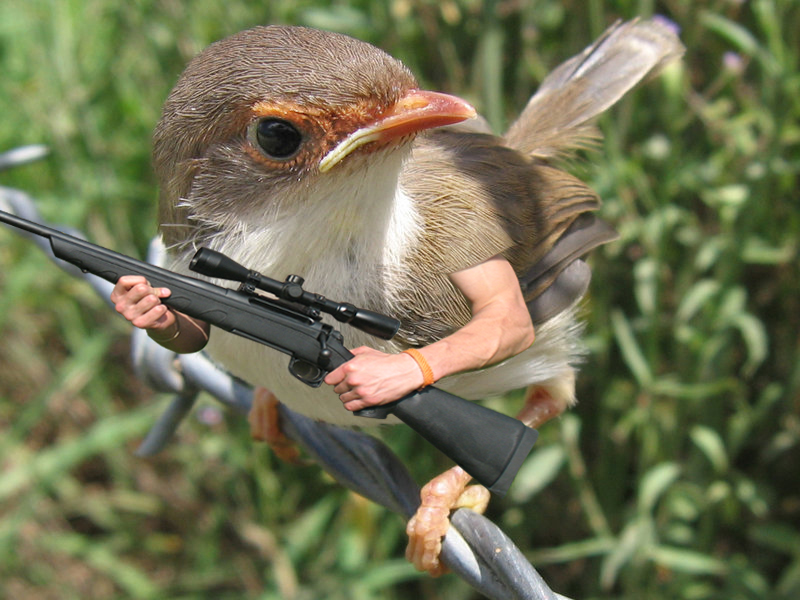 Report: Bird With Gun More Dangerous Than Bird Without
