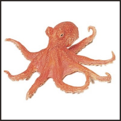 Famous One In a Million World Cup Octopus is Actually Just One In 64 If you Do the Math