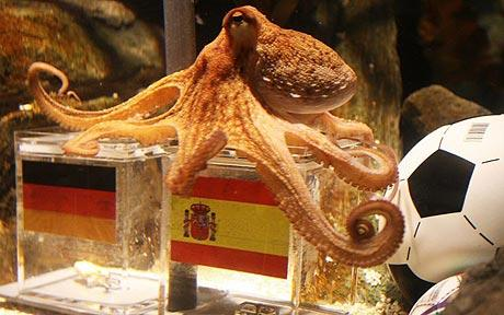 Paul the Psychic Octopus Retires from Professional Predicting, Ponders Next Steps