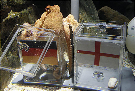 Obituary: Paul The Octopus