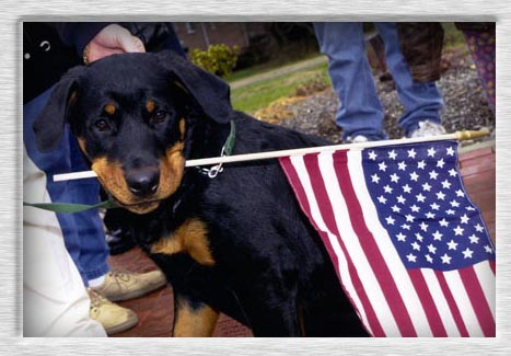 US Military Unveils Dog Capable of Smelling Hatred of America