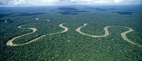 Amazon Sues Rainforest for Copyright Infringement