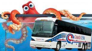 Dear Abby, My Dorm is Going to the Aquarium and I Really Want to Steal an Octopus but I'm Terrified of Coach Buses. What Do I Do? Sincerely, Tentacle Thief