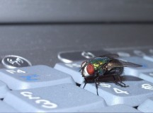 Report: Bugs Underrepresented in CS Community