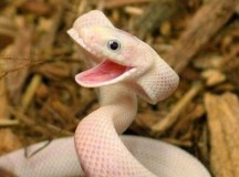 Op Ed: Please Stop Treading on My Snake