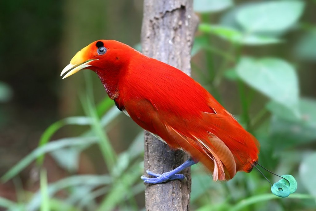 "Endangered Rainforest Canopy Bird ""Unfortunately Delicious"""
