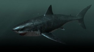 Op-Ed: Megalodon Is In Lake Lag And I Have Proof