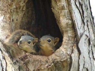 Studies Reveal 97% of Squirrels Born Out of Wedlock