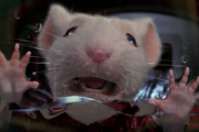 Stuart Little Gnaws Through Arm After Eighteenth Hour Caught in Mousetrap