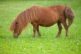 Pony on Horse Tranquilizer Really Into Jazz
